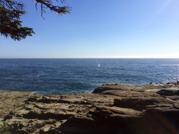 Sea Lions with Whale spotting