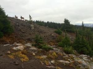 Deer Family Visitors