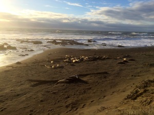 Seal Neighbors
