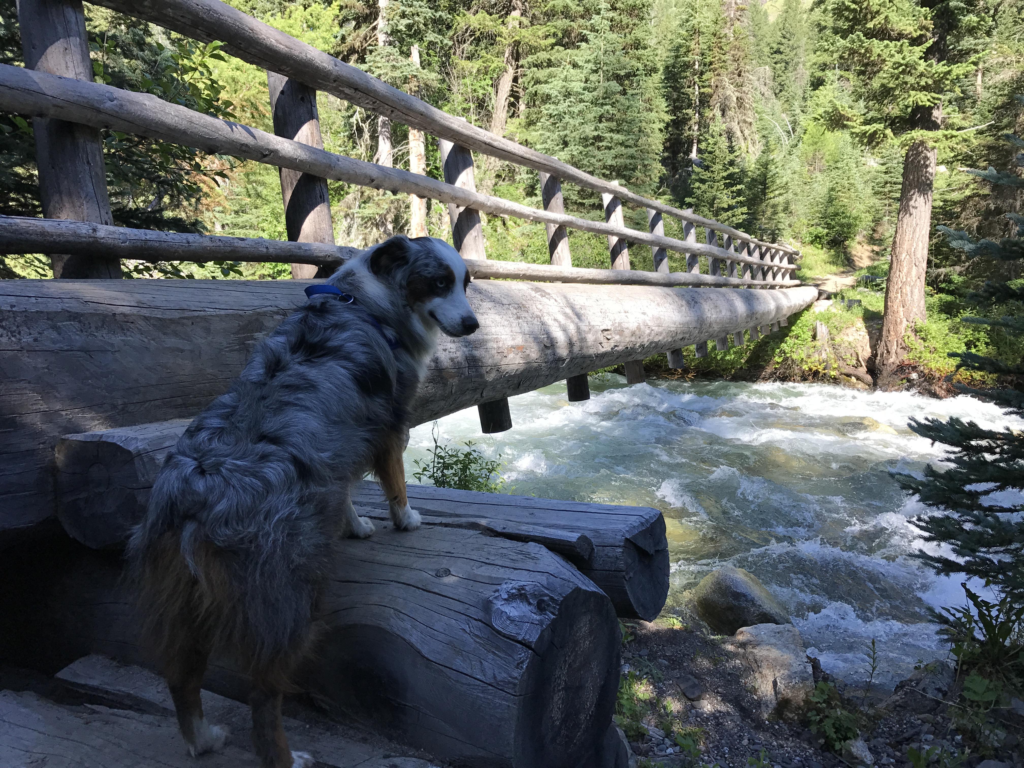 Bridge over Wallowa River