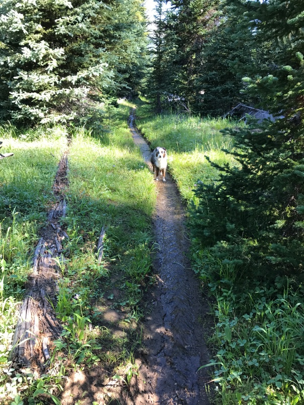 Trail to Frazier Lake