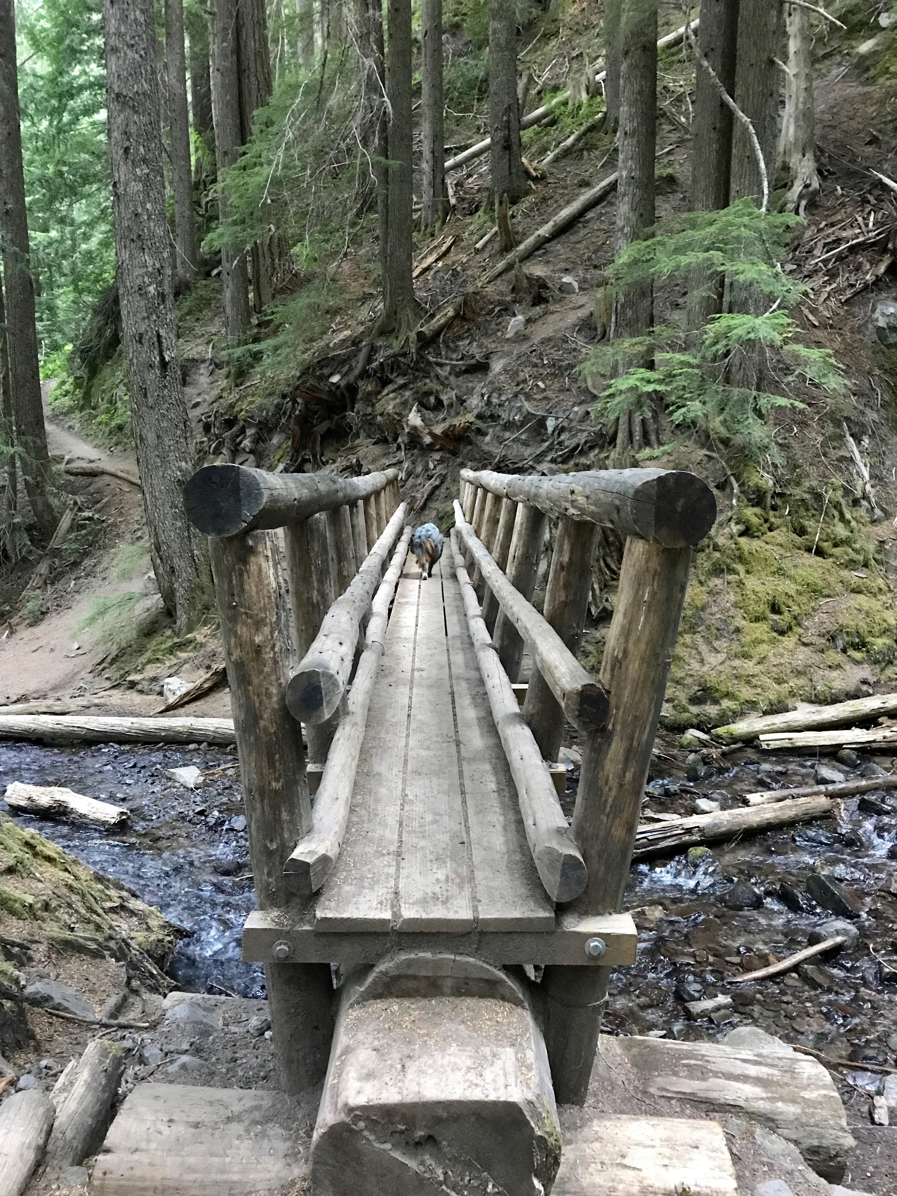 Bridge at Ramona Falls