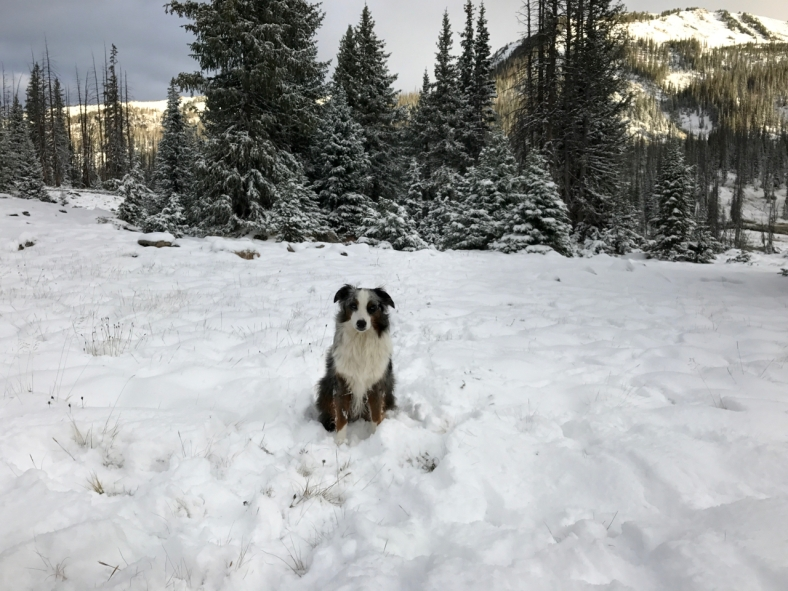 Brook waiting in Snow