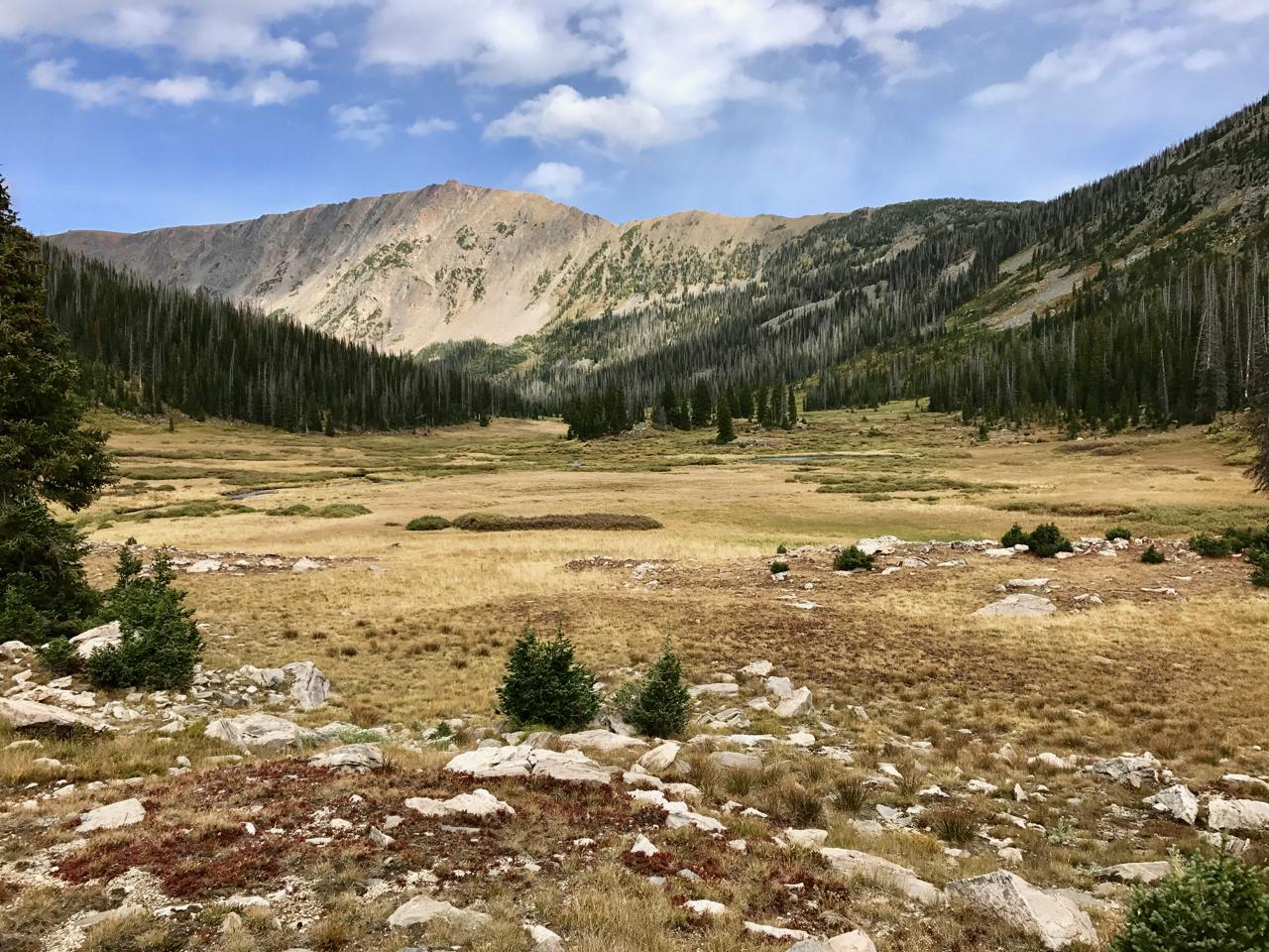 Gold Creek Meadow