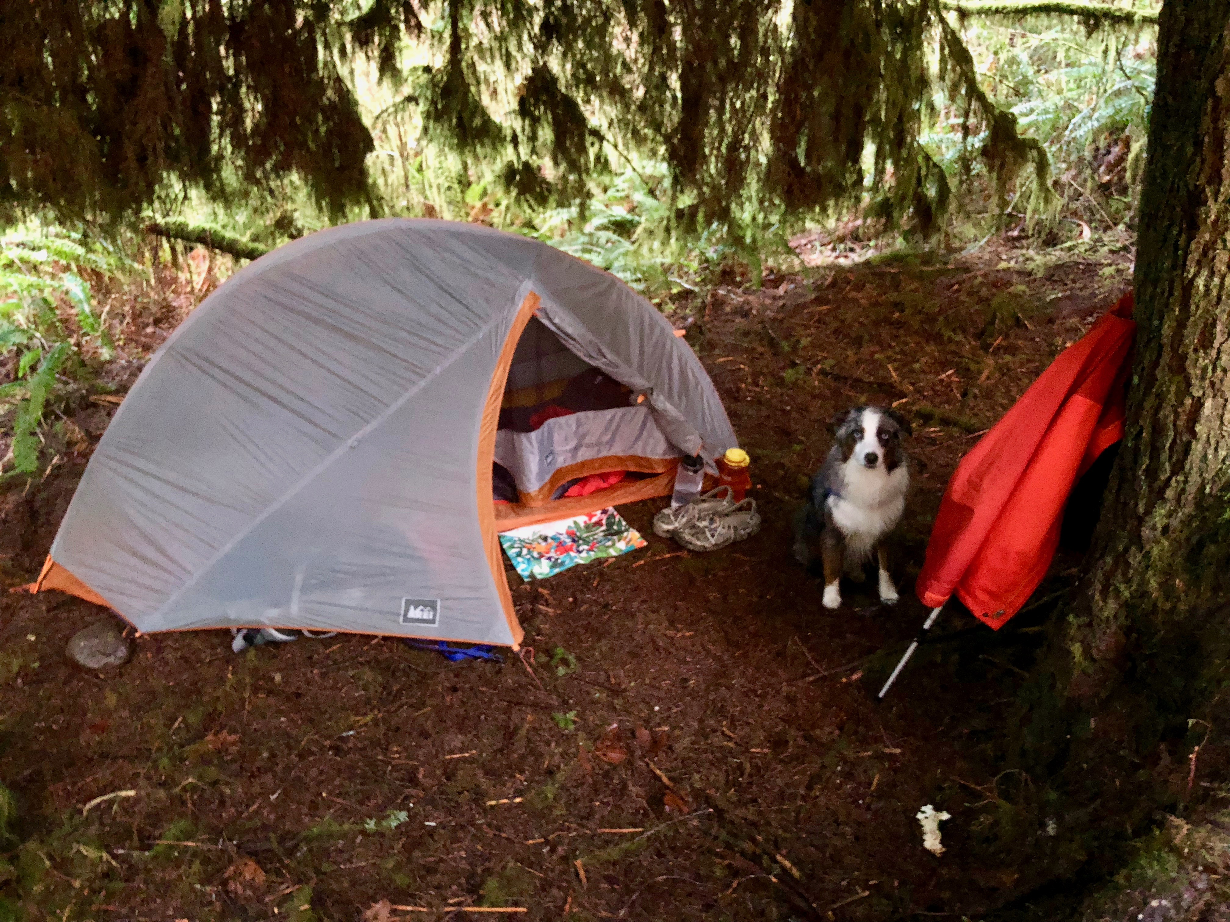 Campsite under tree cover.