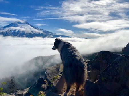 Mt Hood from above the Clouds
