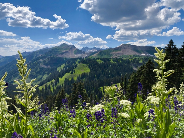 Flowers of Colorado Trail