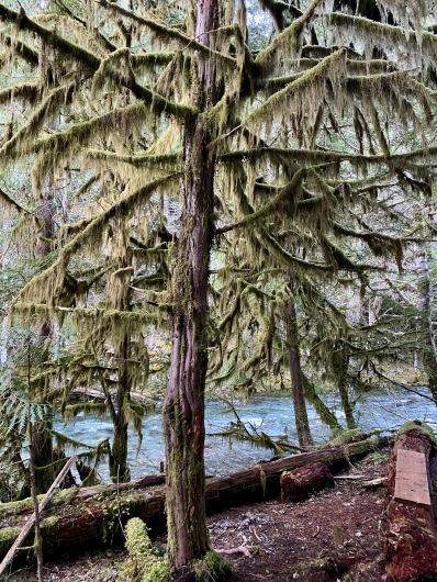 Campsite Mossy Trees