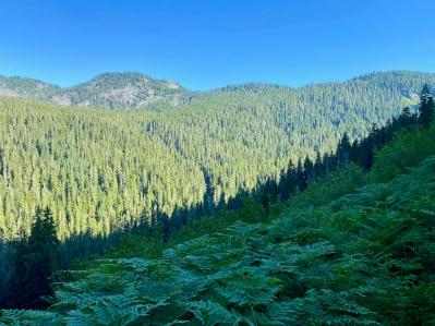 Trees & Ferns